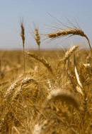 Shavuot: The Stopping Point